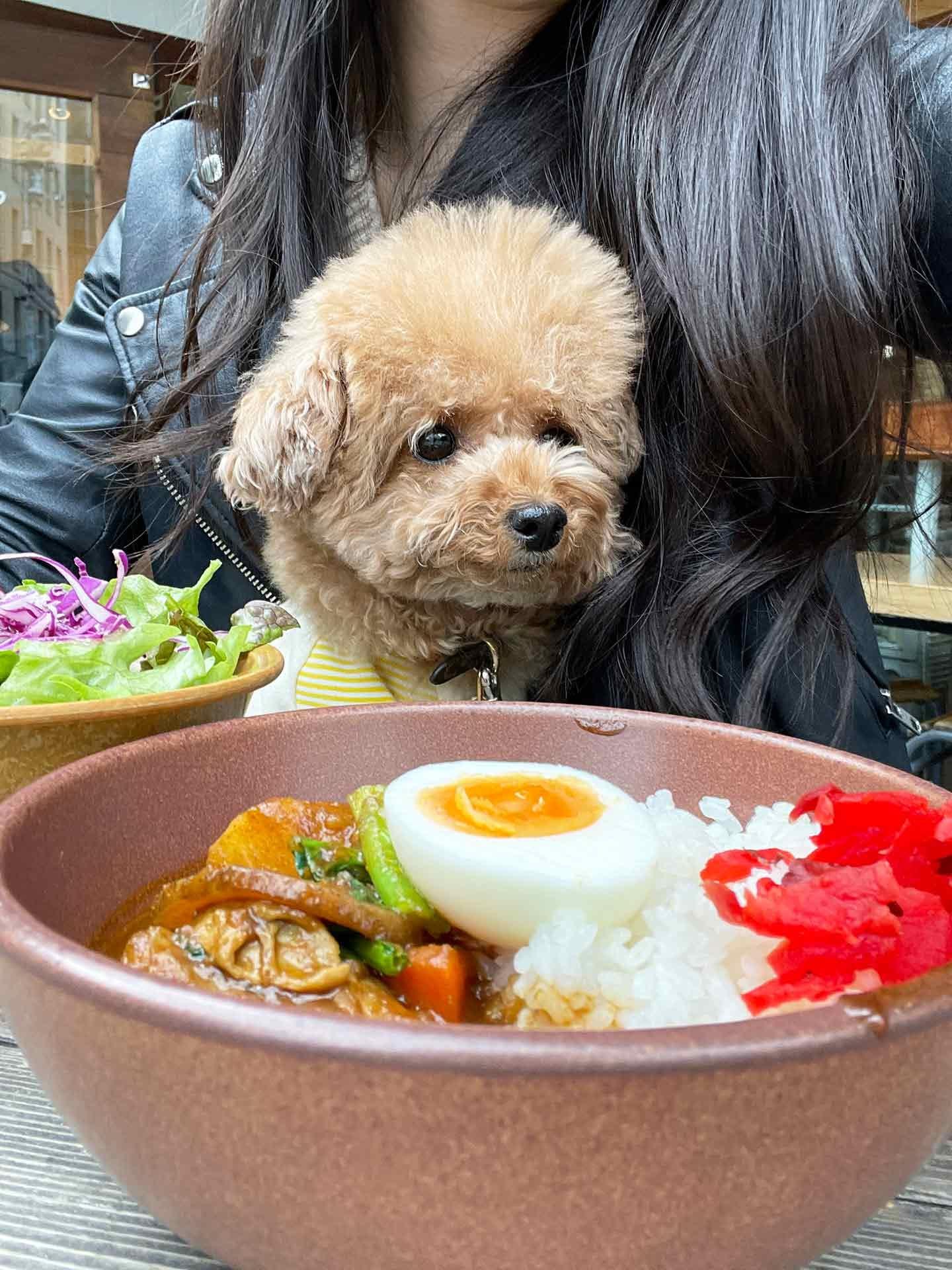 犬スタグラマーがオススメ ごはんも美味しいお店 タスヤード こてつ カレー