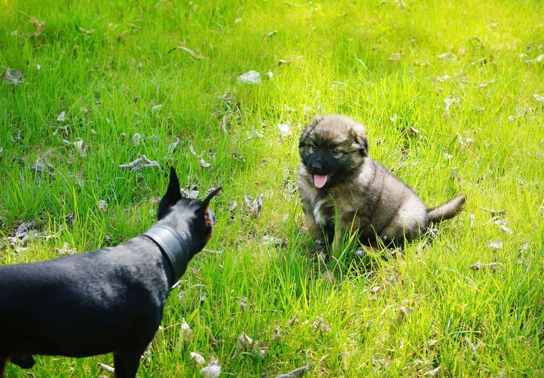 対面する2匹の犬
