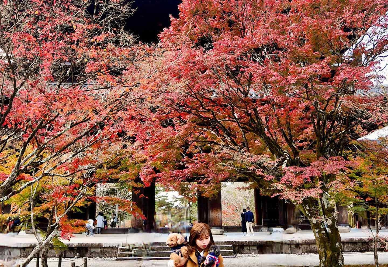 愛犬と南禅寺をお散歩
