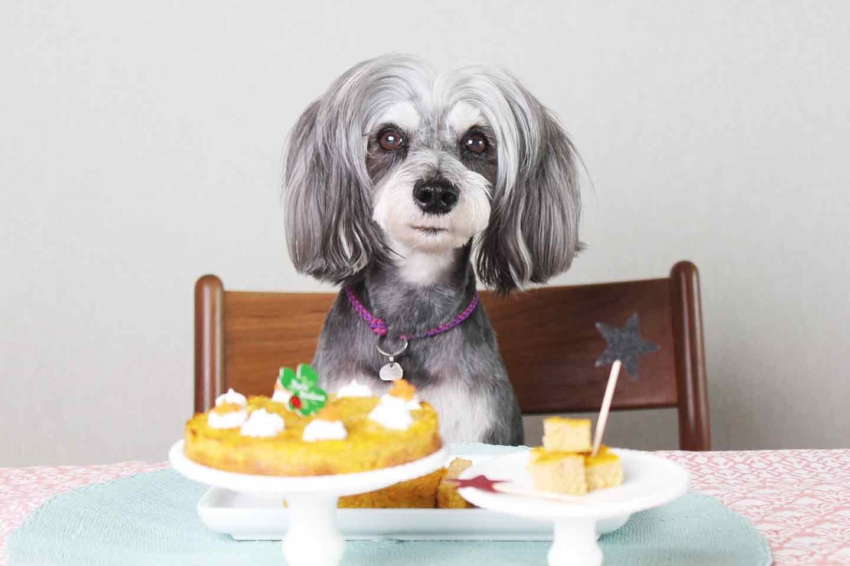 愛犬手作り健康ごはん にんじんケーキ 誕生日 記念日
