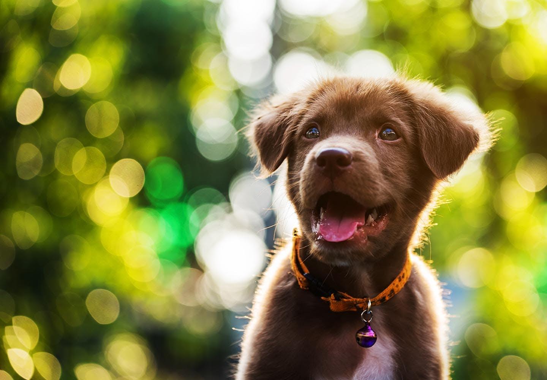 犬が食べると危険な花とは?誤食した時の対処法や散歩中の注意点を解説【獣医師監修】
