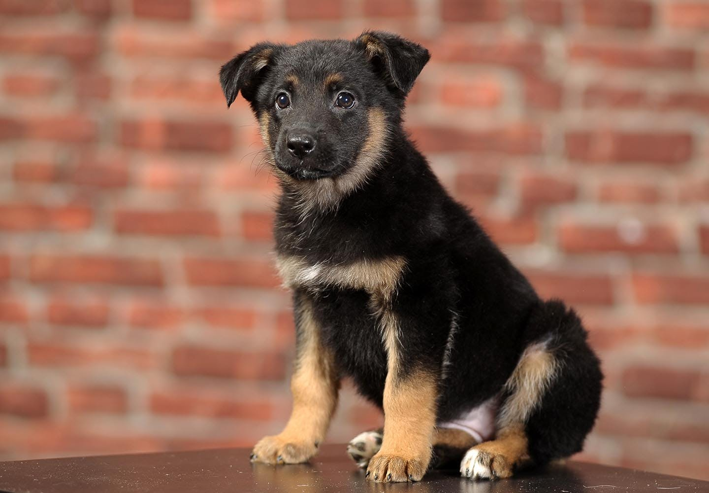 【獣医師監修】ミックス犬の特徴とは?雑種犬との違いや種類、飼い方のコツなどを解説