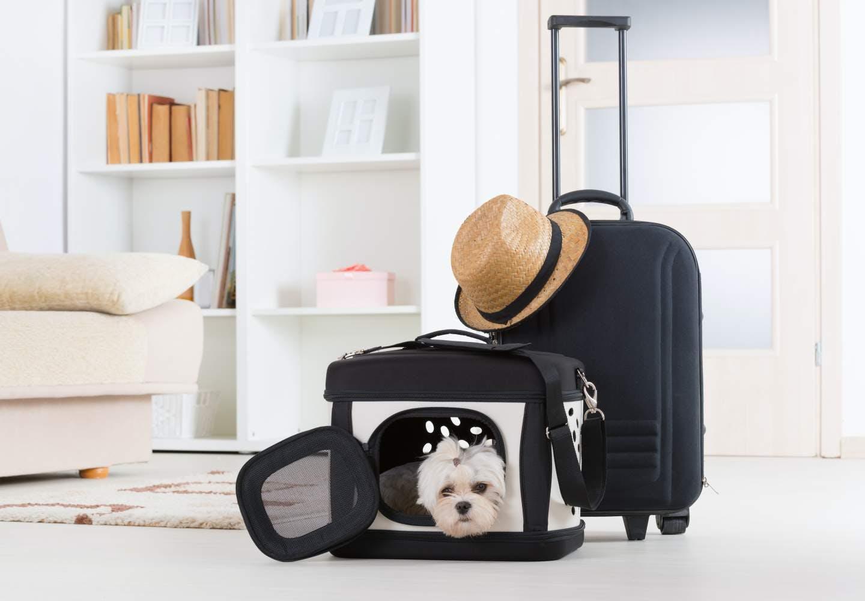 【ドッグトレーナー監修】新幹線に犬を乗せるのは有料?_犬、新幹線