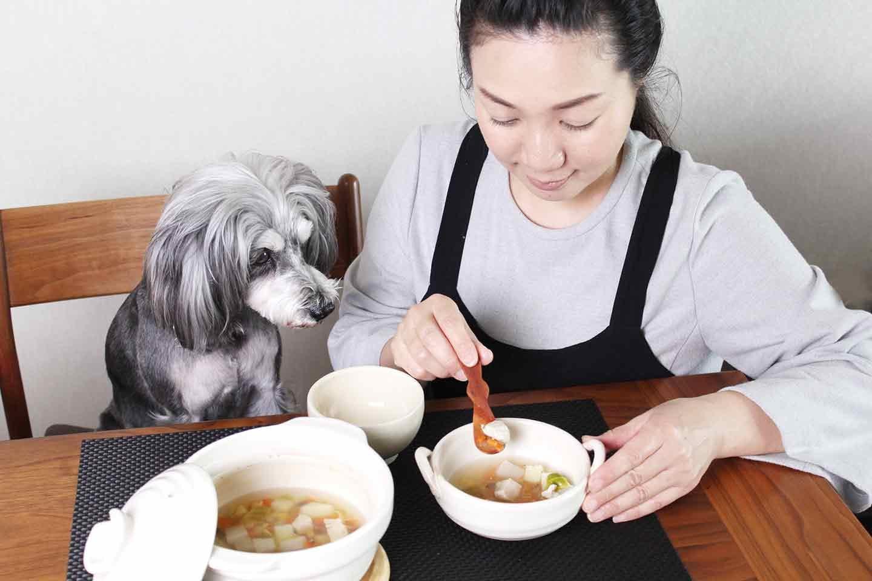 愛犬手作り健康ごはん チキンポトフ レシピ シュナウザー