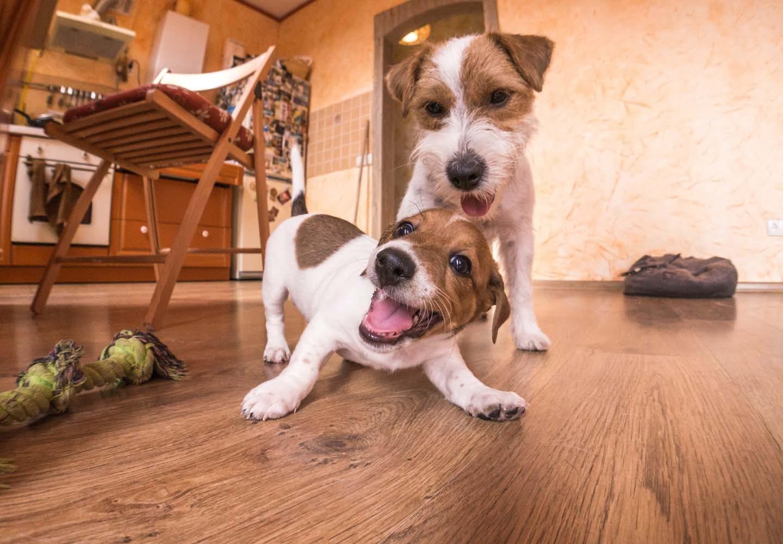 遊ぶ2匹の犬
