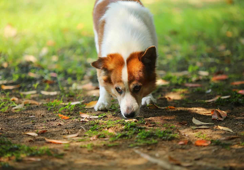 匂いを嗅ぐ犬