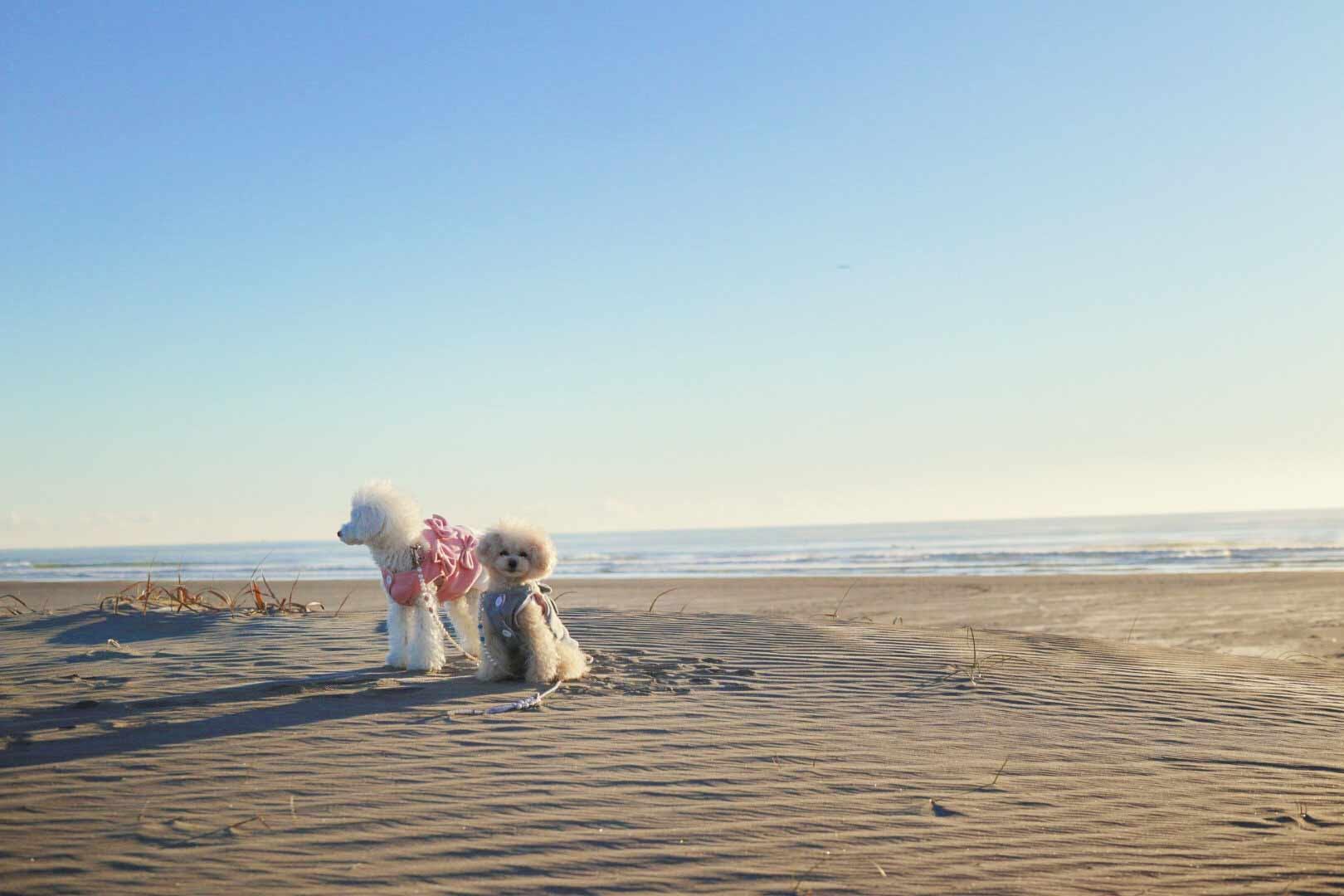 【九十九里】愛犬と浜焼きランチやドッグランも!都内から近い海辺で思いっきり愛犬と遊ぼう♪