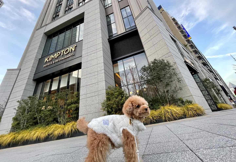 全館同伴可能!キンプトン新宿東京では愛犬と贅沢なひとときを体験できる♪