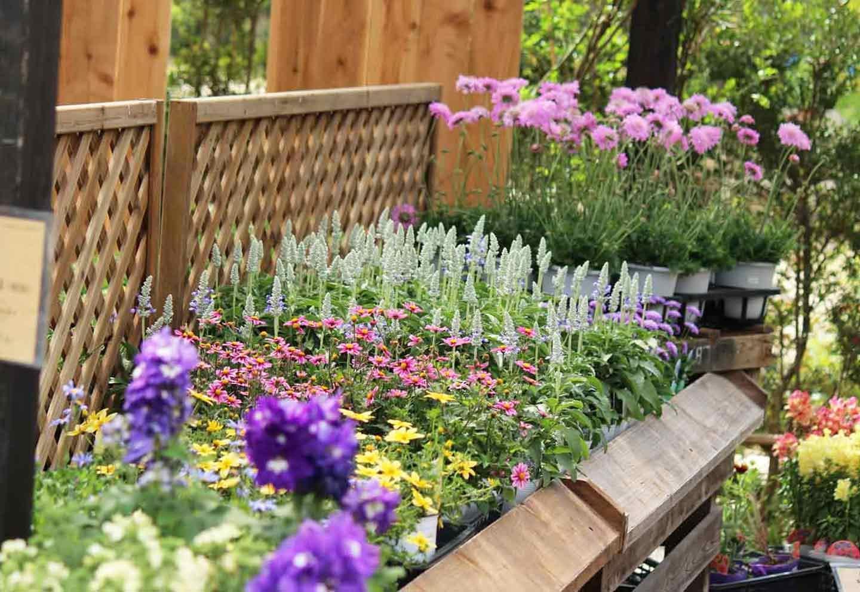 様々な品種の苗が揃う苗売り場