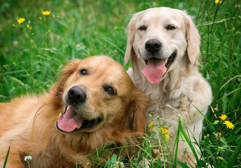 犬の多頭飼いって大変?注意点と必要な準備、相性や先住犬へのケアなどについて解説【獣医師監修】