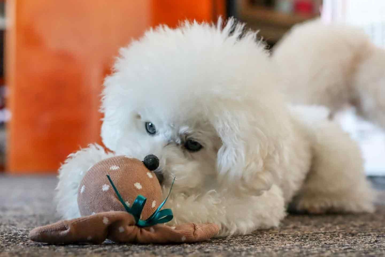 靴下うさぎ 愛犬おもちゃ手作り 遊ぶ犬