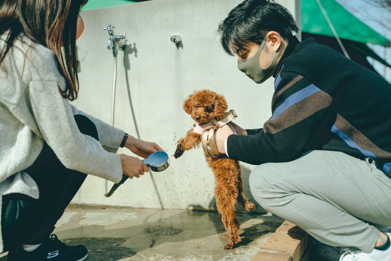 わんちゃんの脚を洗う犬用シャワー