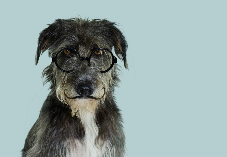 【獣医師監修】犬のひげは切っても大丈夫?_犬、ひげ