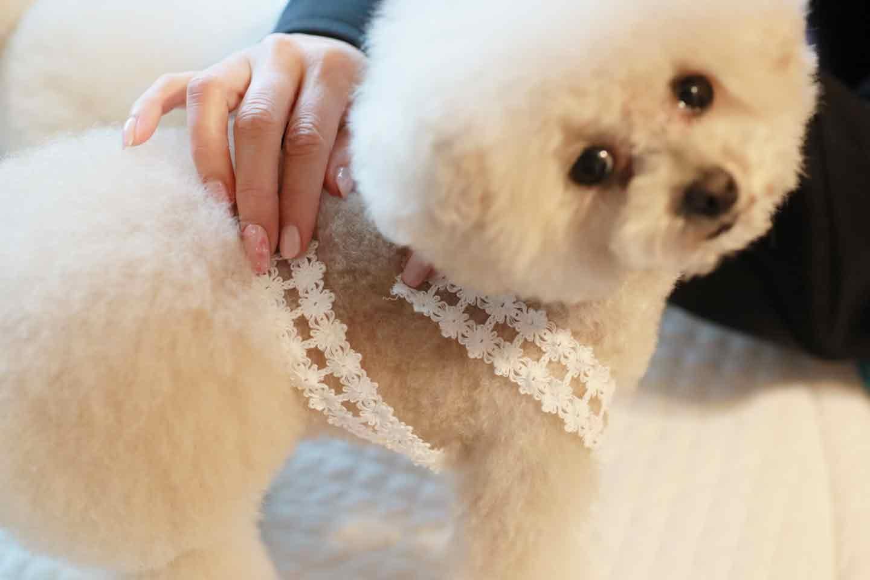 愛犬用ミニランドセル風の小物入れ 犬に合わせてゴムを装着