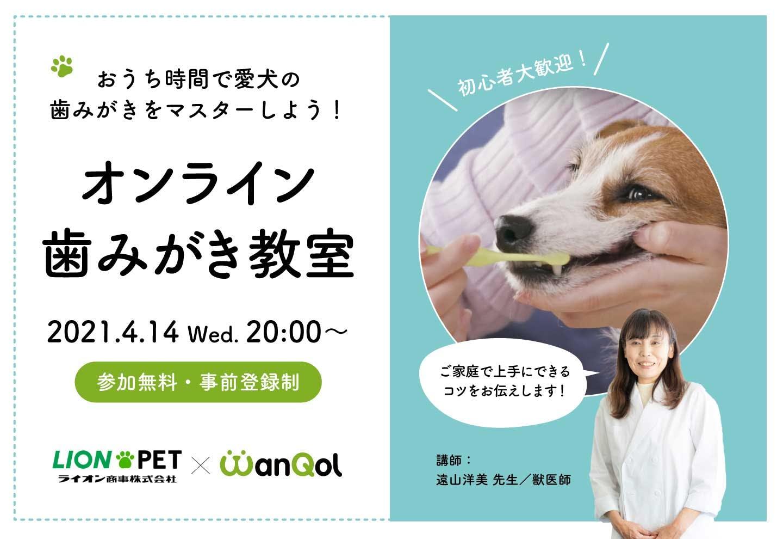 獣医師さん直伝!【オンライン歯みがき教室】おうち時間で愛犬の歯みがきをマスターしよう!