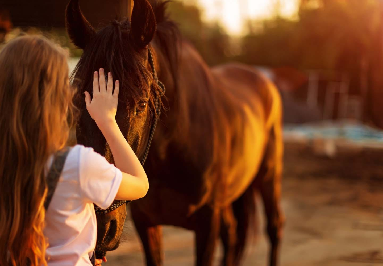 馬のアニマルセラピー
