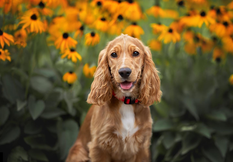 【獣医師監修】犬が食べると危険な花とは?誤食した時の対処法や散歩中の注意点を解説