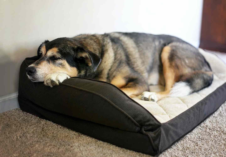 【獣医師監修】老犬ホームってどんな施設?_老犬ホームとは