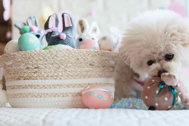 靴下うさぎ 愛犬おもちゃ手作り 匂いをかぐ犬