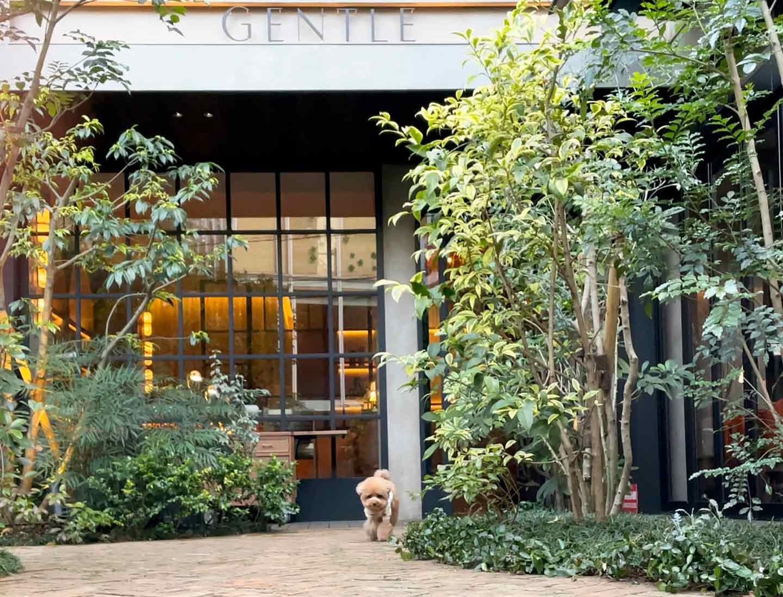 犬スタグラマーがオススメ ごはんも美味しいお店 ジェントルダイニング 犬同伴可