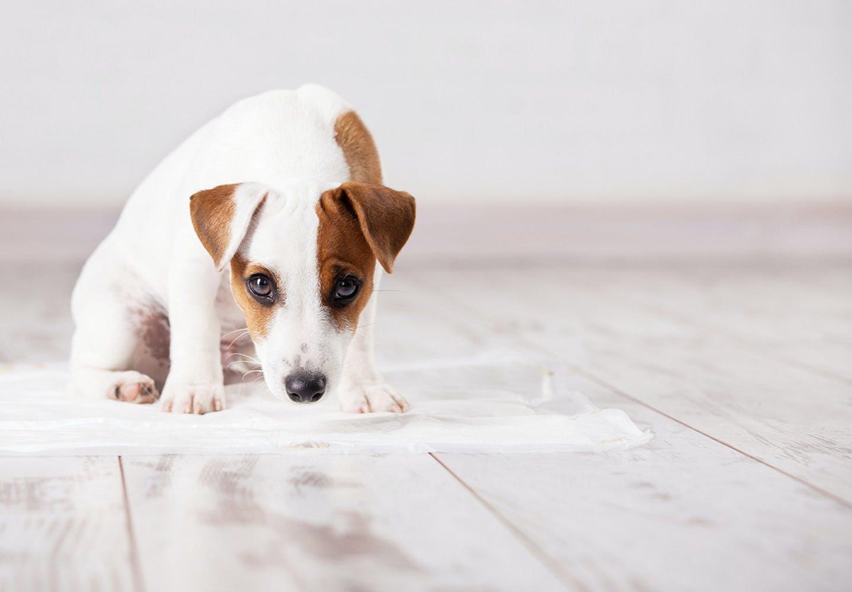 犬がうんちを食べるのはなぜ?食糞行動の理由や、やめさせるための対策、叱るときの注意点を解説【獣医師監修】