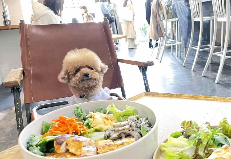 【10%OFF特典あり】全店犬連れ可!カフェ好きな飼い主さんにオススメしたい最新激アツスポット3選