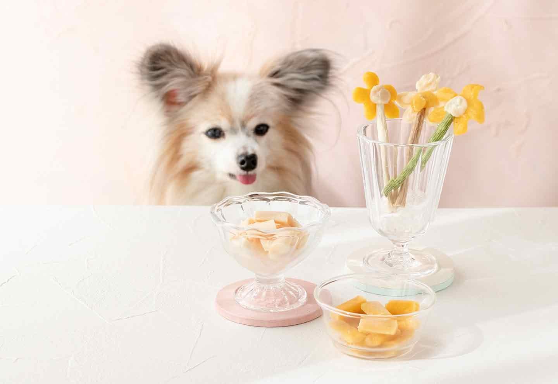 【材料2つ】愛犬用ペーストおやつを絞って凍らせるだけ!見た目も可愛いアイスキャンディーの作り方♪