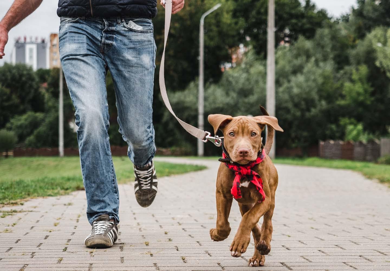 子犬の散歩