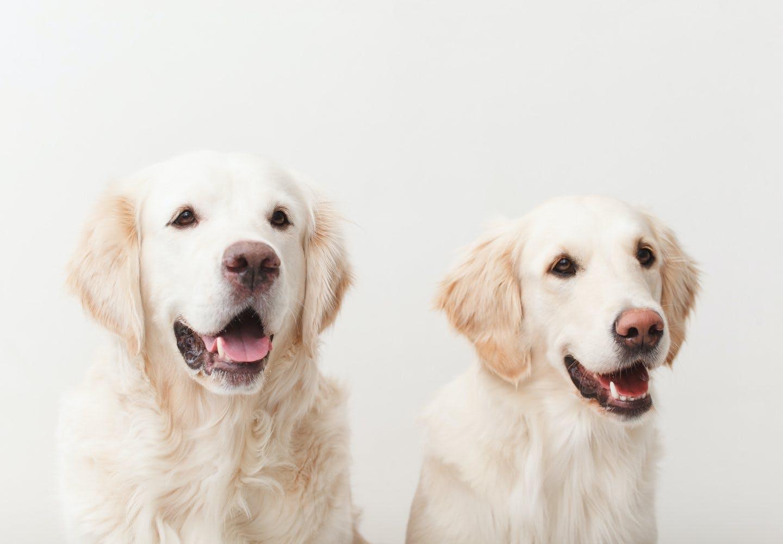 犬の息が荒い原因は?