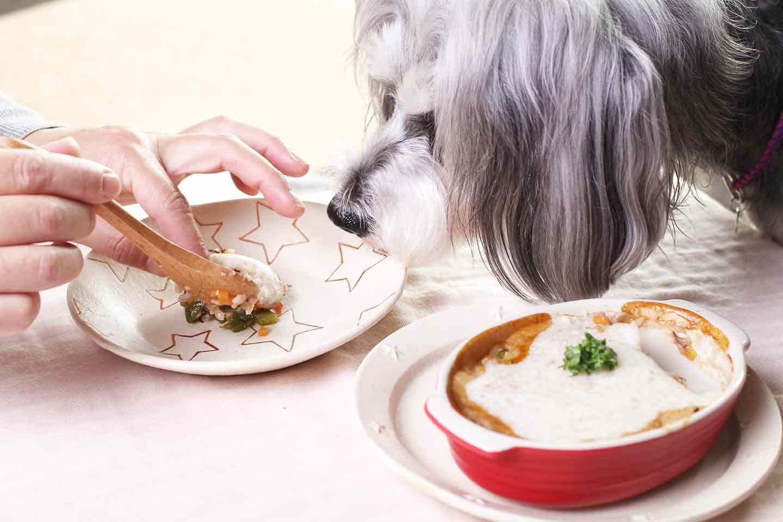 愛犬用ヘルシーな山芋ドリア 栄養満点