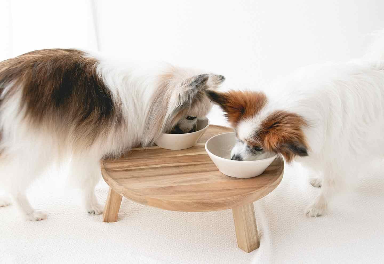愛犬手作りごはん フレーバードッグフード  完食 パピヨン