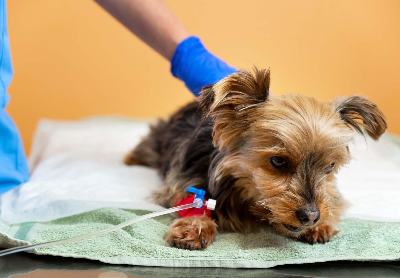 動物病院にいる犬