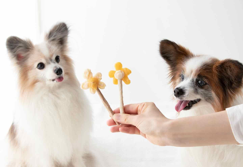 愛犬用花形アイスキャンディー 長持ちおやつ