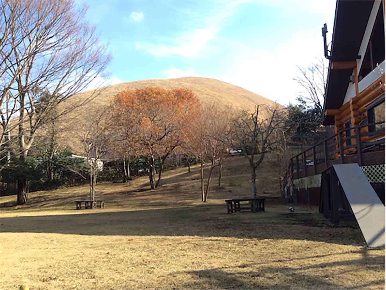 木の葉が落ちて風情のある景色を見られる秋冬のドッグランスペース