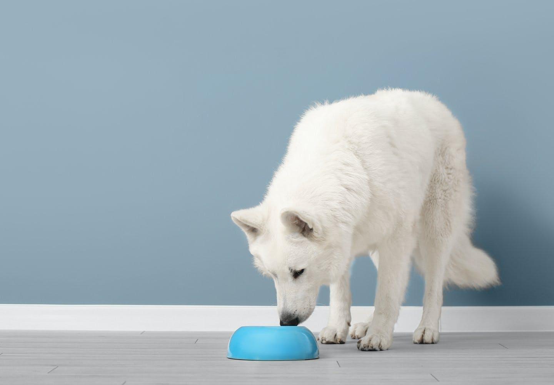 犬は水道水やミネラルウォーターを飲んでも大丈夫?
