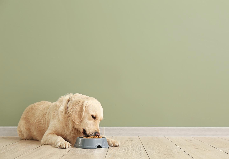 犬が食べてはいけない危険な食べ物って?注意すべき理由と誤食してしまったときの対処法を解説【獣医師監修】