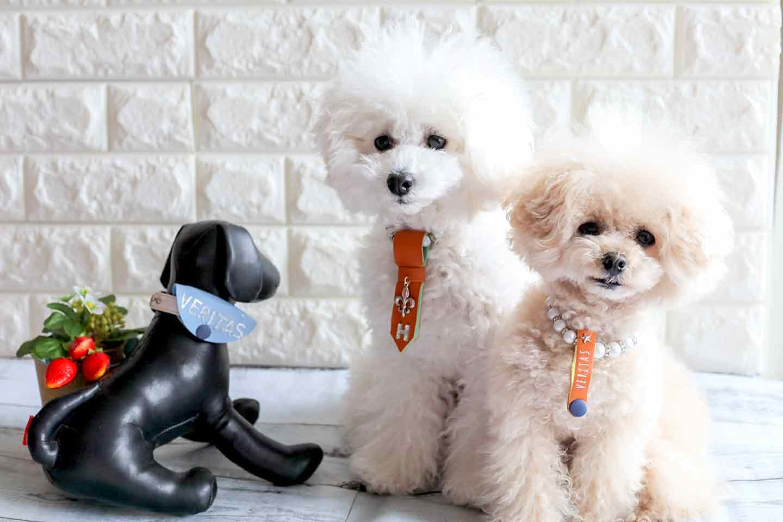 【簡単10分】100均アイテムで愛犬のオシャレな迷子札を手作りしよう♪身につけておけば、いざと言う時にも安心!