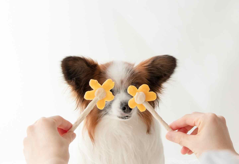 愛犬用花形アイスキャンディー おうち時間