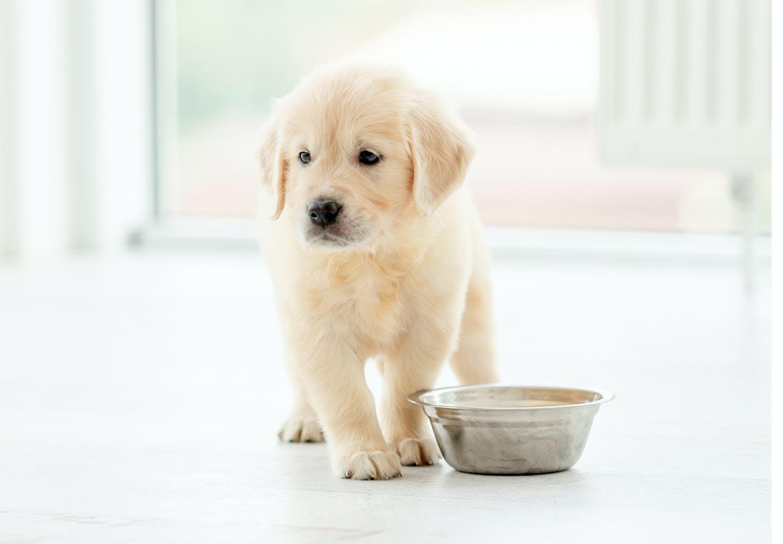 犬が食べると危険な食べ物まとめ!注意すべき理由と誤食してしまったときの対処法を解説【獣医師監修】