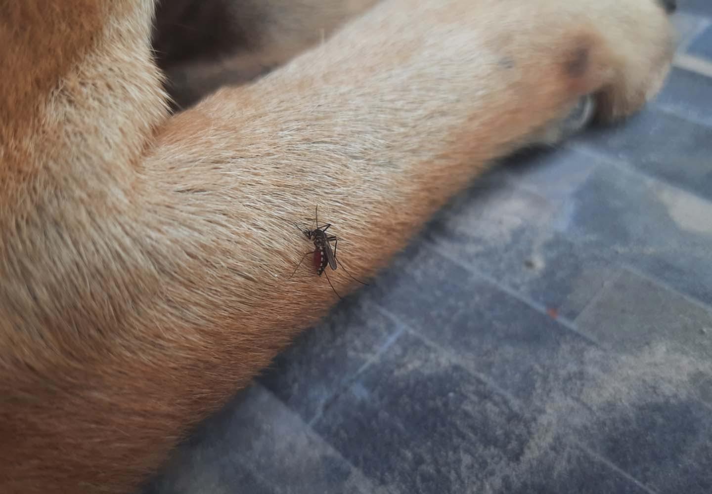 蚊に噛まれた犬