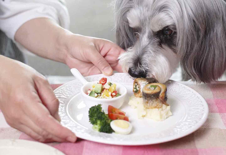 【15分で2品完成】香りが食欲を刺激する!いわしのくるくる巻きと豆腐サラダの愛犬健康レシピ♪