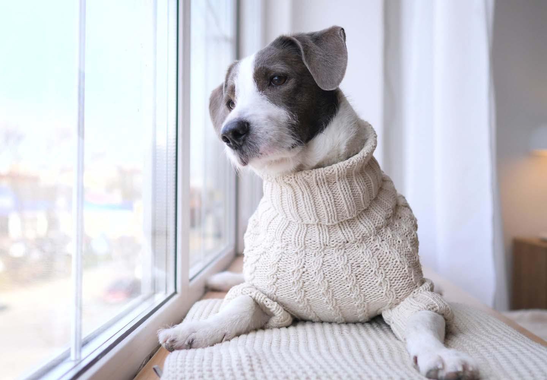 ため息をつく犬