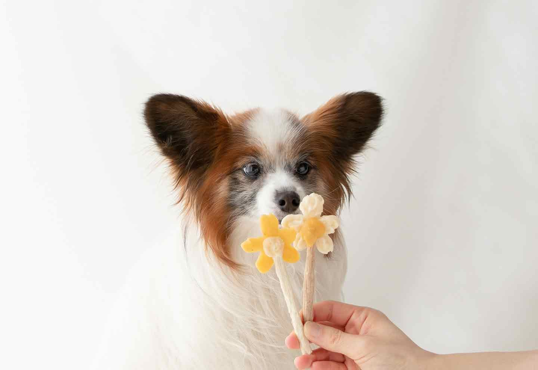愛犬用手作りアイスキャンディー 作り方