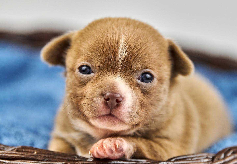 犬の目が白いのは白内障?見極めるポイントと病院に連れて行くべき症状について解説【獣医師監修】