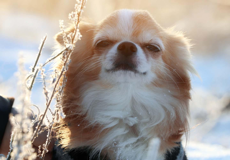 犬がため息をつく理由は?ため息をつきやすい犬種や、その裏にある犬の気持ちについて解説【獣医師監修】