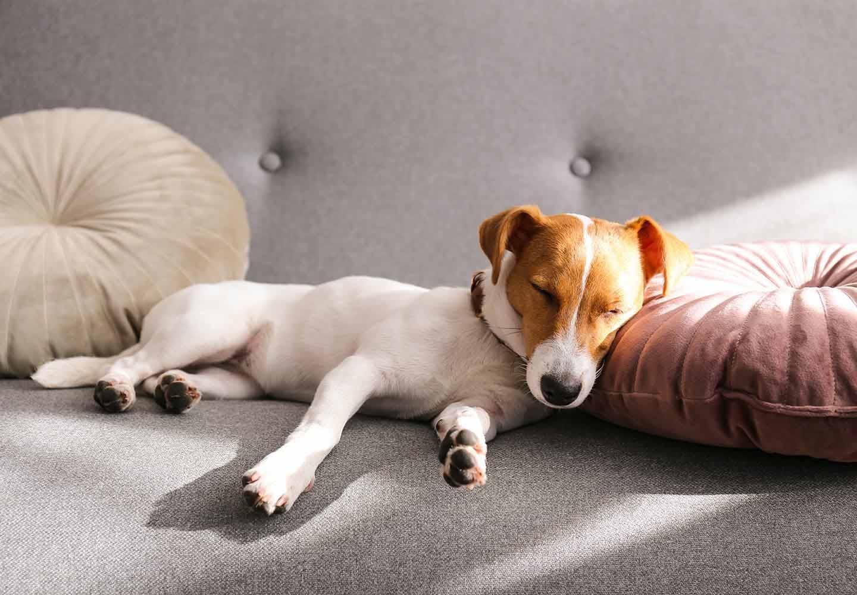 犬のお腹がキュルキュル鳴る原因は?考えられる病気と病院に連れていくべき症状、対処法について解説【獣医師監修】