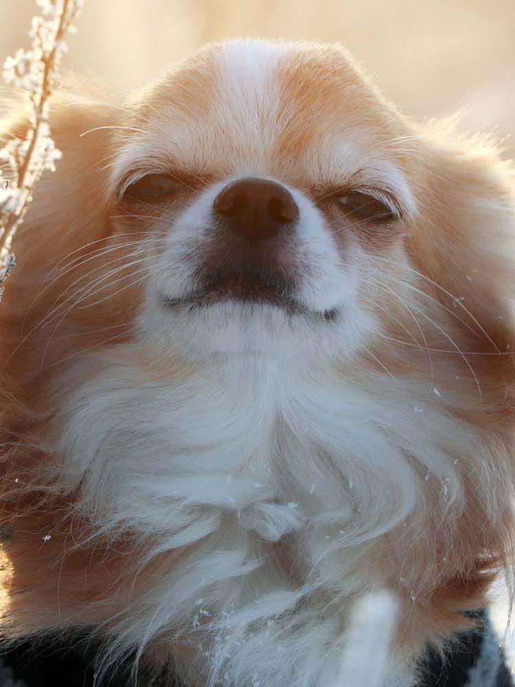 犬がため息をつく理由は?その裏にある犬の気持ちと病気の可能性について解説【獣医師監修】