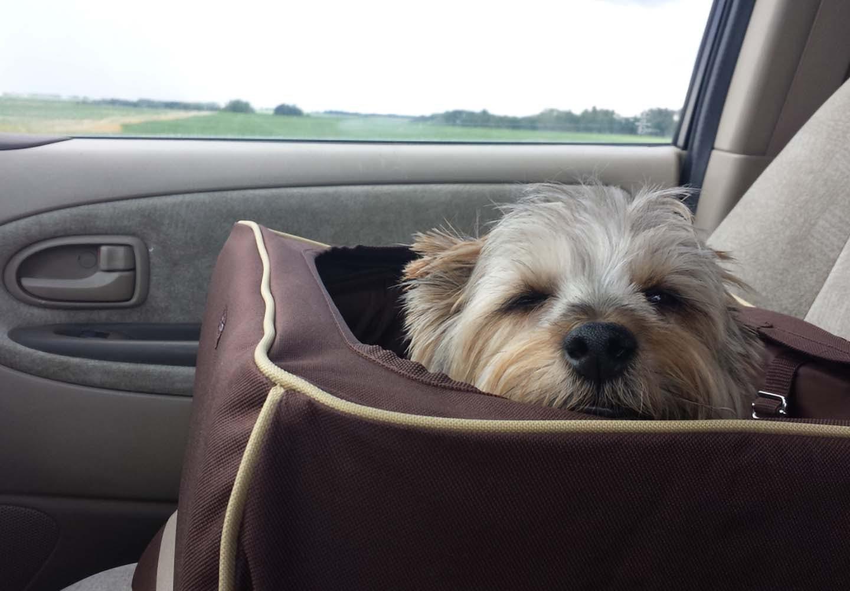 ドライブボックスに入った犬