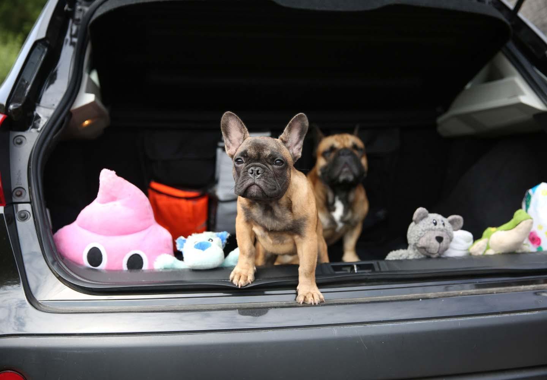 車で遊ぶ犬