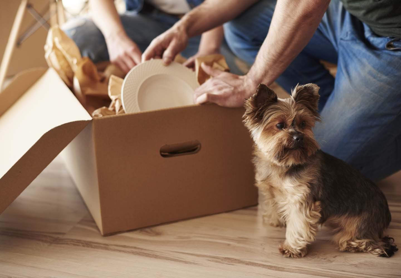 引越し作業と犬
